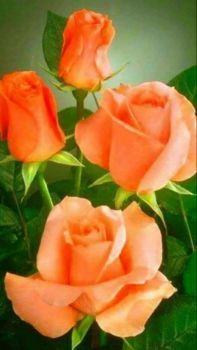 pieces jigsaw puzzle) Beautiful shade of orange, Rose. Wendy ,I Hope you like this Rose . Beautiful Bouquet Of Flowers, Beautiful Flowers Wallpapers, Pretty Roses, Amazing Flowers, Beautiful Roses, Colorful Flowers, Orange Roses, Coral Roses, Lavender Roses
