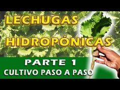 MIS LECHUGAS HIDROPÓNICAS (cultivo paso a paso) - YouTube
