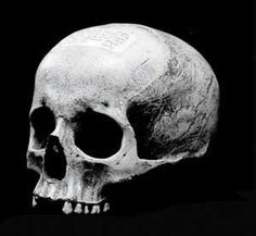 Twilight Histories Podcast - Mozart was buried in an unmarked grave just outside Vienna in The grave digger put a chord around Mozart's neck so he could be sure it was him. Ten years later, he dug up the grave and retrieved this skull. Black White Photos, Black And White, Momento Mori, Historical Artifacts, Alternate History, Human Skull, Skull And Bones, Skull Art, Ancient Art