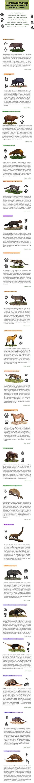 Identificando mamíferos brasileiros