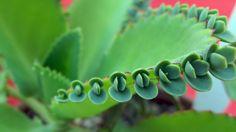México tiene cerca de 30 mil especies vegetales, el 5to. lugar en megadiversidad y el 46% de ellas en peligro de extinción.