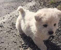 ☽ ★ 𝙞 𝙝 𝙞 𝙠 𝙖 𝙖 𝙥 ☆ ☾ smol cute baby animals, fluffy animals и p Cute Dogs And Puppies, Baby Dogs, I Love Dogs, Doggies, Adorable Puppies, Baby Puppies, Cute Little Animals, Cute Funny Animals, Fluffy Animals