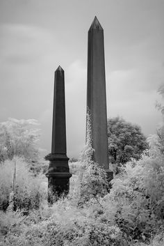 Abandoned Mount Moriah Cemetery, Philadelphia, PA