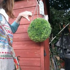 Thumbs down for plastic grass ball shed  sorry if im turning into a shed snob #shed survey