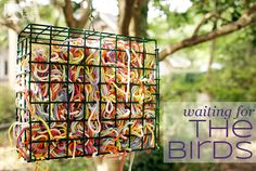 Yarn - help the bird make their nests cozy & bright.  You can also put lint from the dryer into the cage.