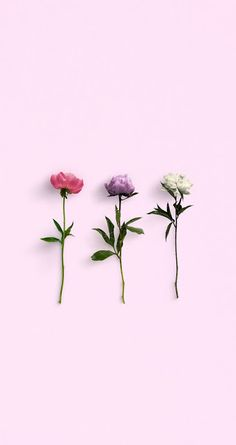 Peonies, Pastels and Positivity: Free Wallpapers