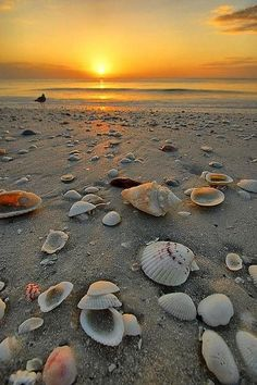 sunset and sea shells