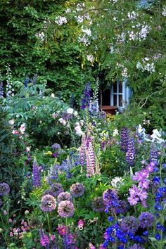 Cottage garden with delphinium, lupin, allium, and more, uncredited