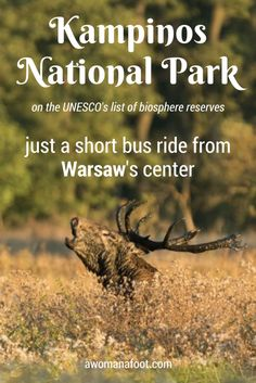 Kampinos National Park - a true natural gem right outside of Warsaw, Poland. | what to see in Poland | What to see in Warsaw | Natural Parks in Poland | Polish Nature | Travel in Poland | Sightseeing in Poland | day hikes from Warsaw | WW2 history | partisans | desert | European travel | off the beaten path travel | awomanafoot.com