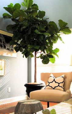 Dressing Rooms Interiors: My Indoor Tree House