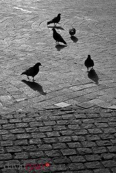 Dublin www.davidryanphotography.ie