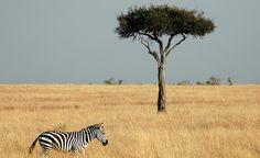 30 Incredible Wildlife Encounters on Safari