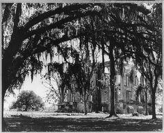 Belle Grove Plantation ruins through the trees