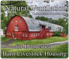 Natural Ventilation for Homestead Barn Livestock Housing - Clean Air Grows Healthier Animals  Homesteading  - The Homestead Survival .Com