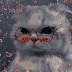 Cute Panda Wallpaper, Bear Wallpaper, Cute Disney Wallpaper, Wallpaper Iphone Cute, Cute Baby Cats, Cute Kittens, Cute Little Animals, Panda Wallpapers, Cute Cartoon Wallpapers