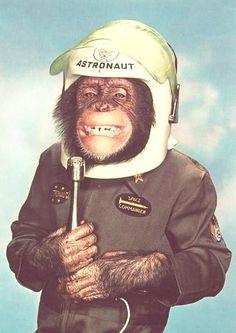 Funny pics~ vintage 1960s snap of monkey astronaut