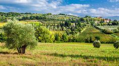 https://thumbs.dreamstime.com/b/olive-trees-vineyards-tuscany-italy-49364786.jpg