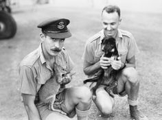 Squadron mascots. 1943. Australian War Memorial collection. Coomalie Creek…