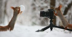 Russian Photographer Captures The Cutest Squirrel Photo Session Ever | Bored Panda