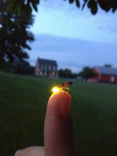 "Do you call these little bugs ""Lightning Bugs"" or ""Fireflies""? Summertime in Iowa."
