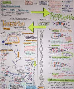 Notes on Central Dogma!