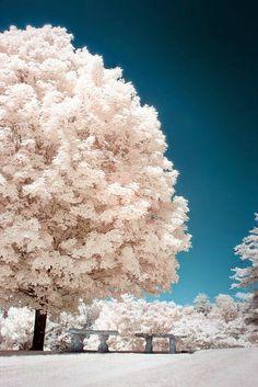 Dreamy Nature                                                                                                                                                     More