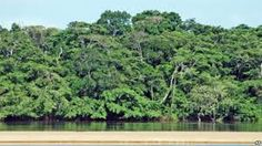 There are many plants in Central African Republic, there are also many deserts. Mostly you would see trees and forests. 36% of all the land consists of tropical forests.