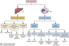 images of sepsis concept map - Google Search