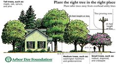 A guide from the Arbor Day Foundation on what trees to plant and where. art design landspacing to plant Landscaping Trees, Privacy Landscaping, Front Yard Landscaping, Trees And Shrubs, Trees To Plant, Tree Planting, Evergreen Trees, Landscape Design, Garden Design