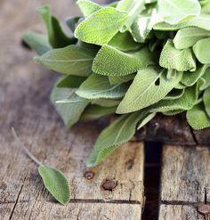 9 plantas comestibles y con propiedades medicinales que no deben faltar en tu…