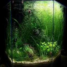 How to set up a self-sustaining aquarium