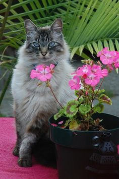 Does your cat love the garden too? Make sure you know which plants can be harmful to your furry friend!