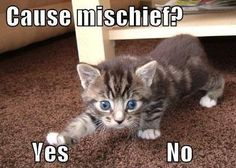 found on I Can Has Cheezburger              Submitted by: Unknown                        Tagged:   kittens ,  cute ,  yes or no ,  mischief ,  Cats   Share on Facebook