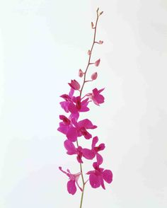 ORCHID Meaning: You're in my thoughts
