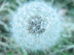 Radacina acestei plante determina celule canceroase sa se sinucida | Sanatate pentru prieteni