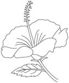 hibiscus coloring page yahoo image search results