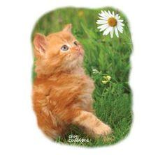 Kitten Playing in Grass Shirt Ginger Cat & Daisy Playful & Fun T-Shirt - Ideas of Cat Tshirt Cat Shirts, Cool T Shirts, Cat Garden, Kittens Playing, Ginger Cats, Cat Life, Cat Lovers, Kids Outfits, Daisy
