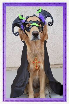 Please vote for this entry in Halloween Pet Costume Contest!