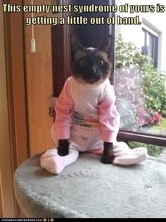 I loved dressing my cats up when I was little