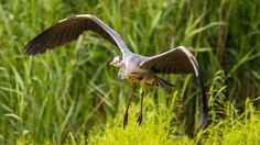 Landing  Animals photo by Mirco_Photography http://rarme.com/?F9gZi