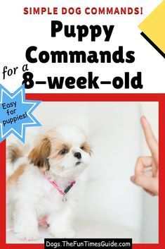 Puppy Training Tips, Training Your Dog, Training Pads, Agility Training, Training Classes, Potty Training, Training Collar, Crate Training, Training Videos