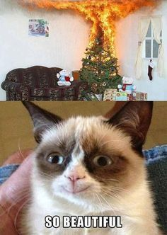Grumpy Cat is happy.about a BURNING Christmas tree.wow, that's real mature <--- it's a Grumpy Cat meme, calm down lol! Funny Animal Quotes, Animal Jokes, Funny Animal Pictures, Cute Funny Animals, Funny Cute, Funniest Animals, Funny Pics, Animal Captions, Funniest Pictures