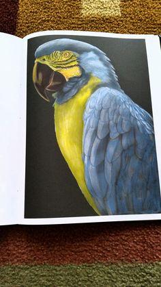 Rosemarie Pat Breitwisch Macaw