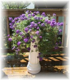 To use the old bird bath as a planter for verbena because it likes to cascade down. Looks lovely!