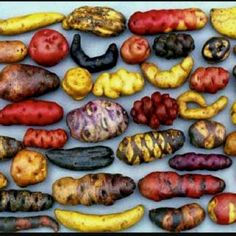 Peruvian potatoes - from Parque de la Papa (Potato Park), a Peruvian agro-ecotourism project. I miss Peruvian potatoes! Peruvian Potatoes, Potato Varieties, Types Of Potatoes, Cuisine Diverse, Peruvian Recipes, Peruvian Cuisine, Think Food, Fruits And Vegetables, A Food