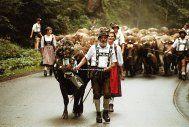 Viehscheid im Allgäu, #Bavaria