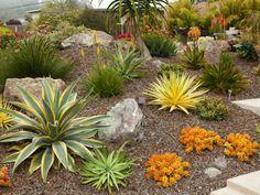 Etonnant How To Plant A Succulent Garden