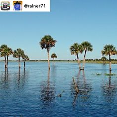 #Repost: 3000 pics on Instagram - my personal favourites: In the Everglades