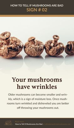 Fresh mushrooms tend to lose moisture overtime making them appear wrinkly and smaller. Unless you purchased dried mushrooms, if you noticed they've become wrinkly and have shrunk, it's time to toss them. | Discover more about medicinal mushrooms at ultimatemedicinalmushrooms.com