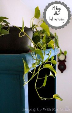 How To Have Lush, Healthy Houseplants With Less Watering